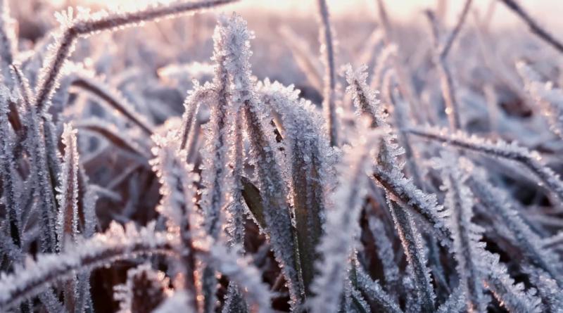 Gelide temperature nella notte del 12 Dicembre 2018