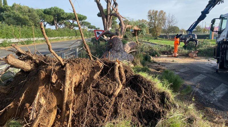 Centinaia di alberi caduti su tutto il Lazio ecco i primi dati